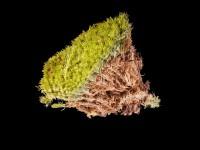 Гербарій несудинних рослин #1